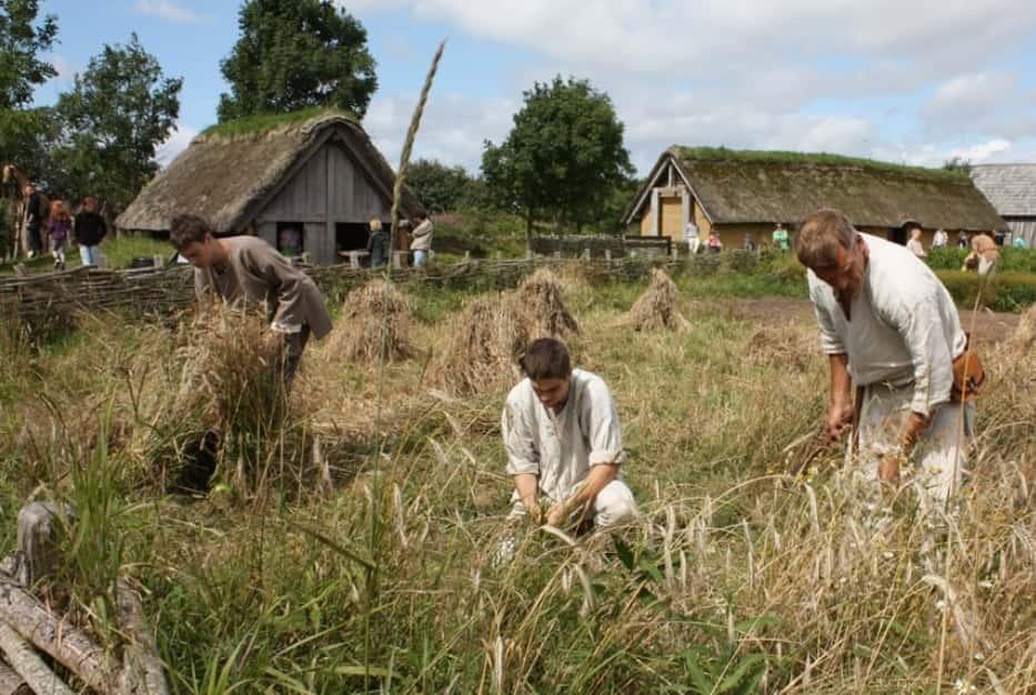 Avid Farmers