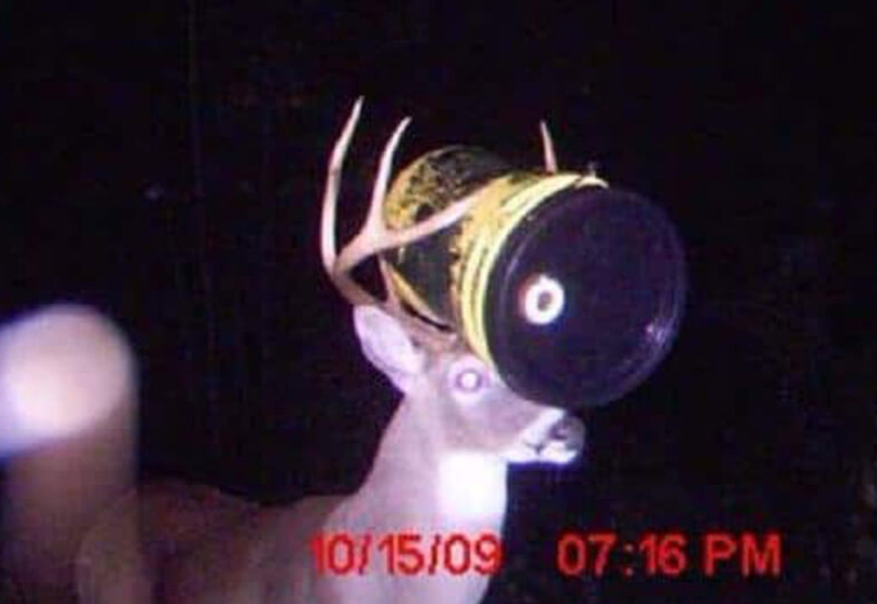 Just A Deer And Its Barrel