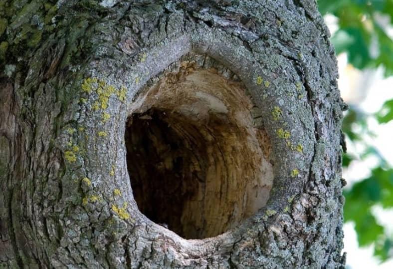 Un árbol les llamó la atención