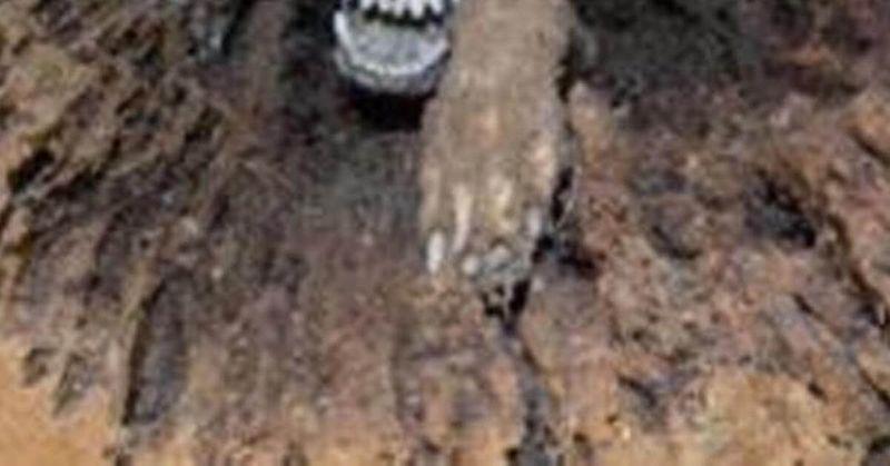 Un perro momificado
